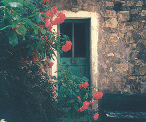 flowers, rose, and door image