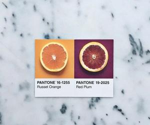 colors, food, and orange image
