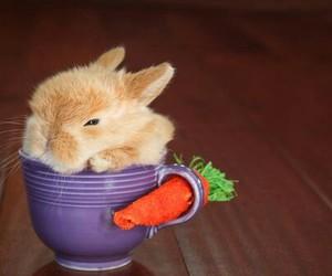 animal, baby bunny, and bunny image