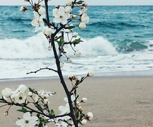 beach and flowers image