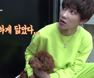 minghao, the8, and dog image