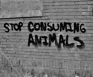animals, vegan, and animal rights image