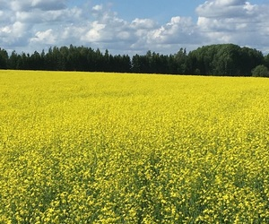 beautiful, country, and sommar image