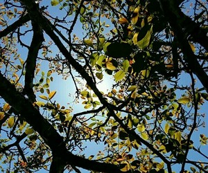 arbre, lumiere, and feuille image