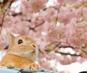 animal, brown, and flowers image