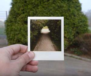 photography, photo, and tree image