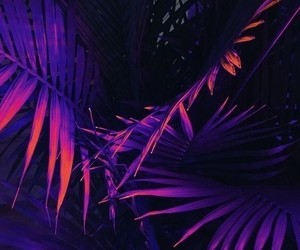 purple, wallpaper, and plant image