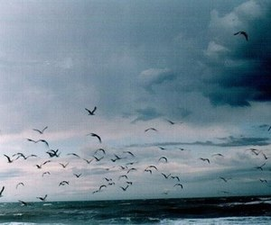 bird, sky, and sea image