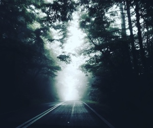 forest, road, and trip image