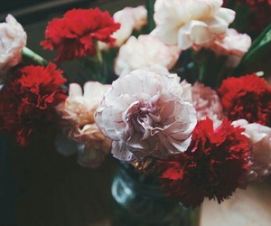 flowers, beautiful, and photography image