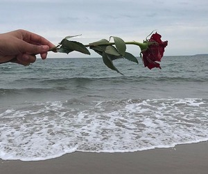 aesthetic, ocean, and rose image