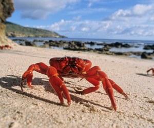 australia, crab, and beach image