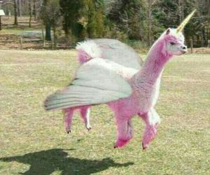 pink, unicorn, and lama image