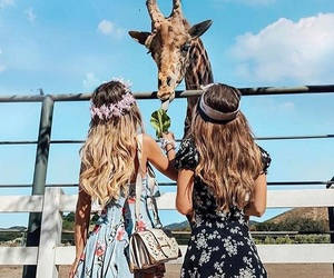 friends, giraffe, and animal image