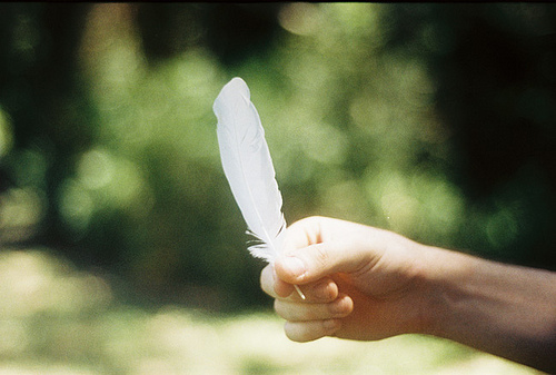 feather, photography, and hand image