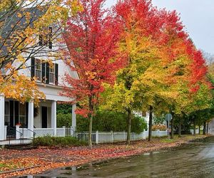 autumn, trees, and Houses image