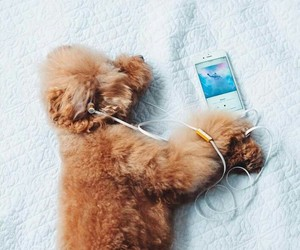 dogs, iphon, and cute image
