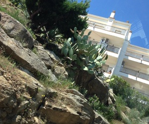 cactus, rock, and roses image