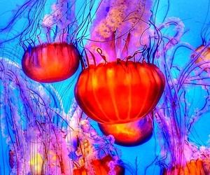 blue, orange, and jellyfish image