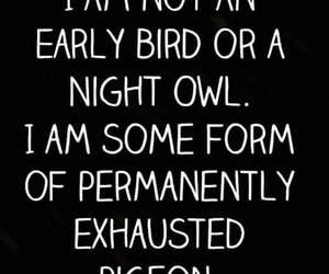 sleep, funny, and night owl image