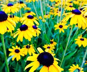 background, flowers, and ohio image