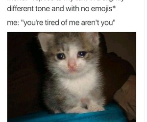 funny, cat, and meme image