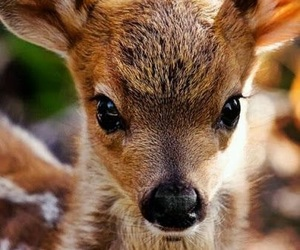 baby, bambi, and faon image