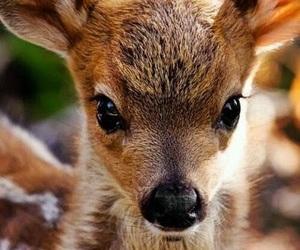 baby, baby animal, and bambi image
