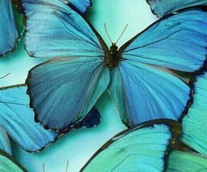 butterfly, blue, and purple image