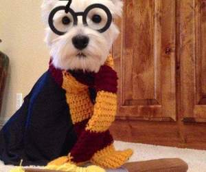 beautiful, dog, and harry potter image