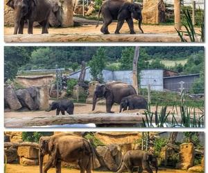 amazing, elephant, and family image