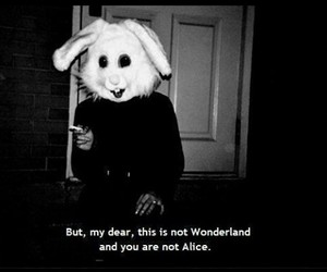 wonderland, alice, and rabbit image