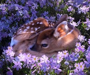 animals, Biche, and flowers image