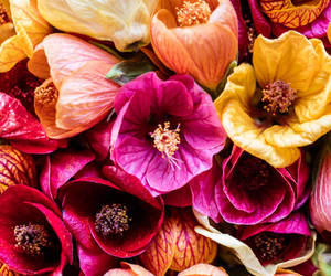 flowers, colors, and fashion image
