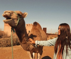 camel, photography, and summer image