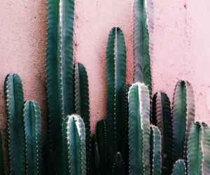 cactus, pink, and green image