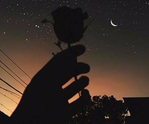 rose, moon, and night image