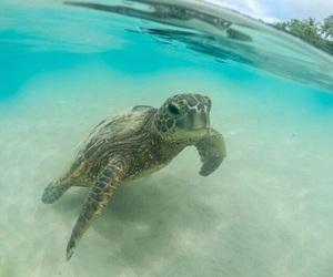 adventure, ocean, and summer image
