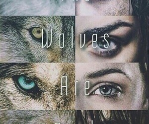 wolf, game of thrones, and stark image