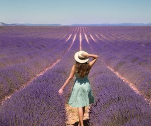 france, photography, and lavender fields image