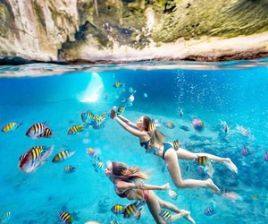 diving, summer, and ocean image
