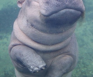 hippo and cute image
