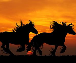 horse, horses, and perfection image