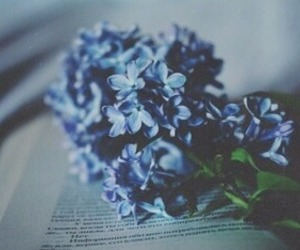 blue, flowers, and book image