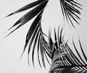 white, black, and wallpaper image