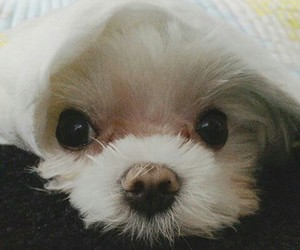 coco, kpop, and puppy image