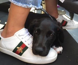 dog, fashion, and gucci image