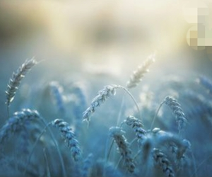 trigo azul image