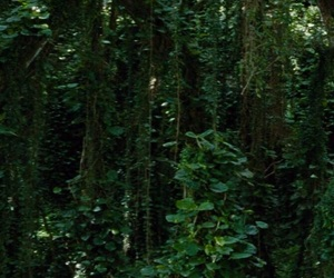green, rainforest, and tropical image