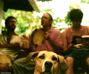 dog and samba image